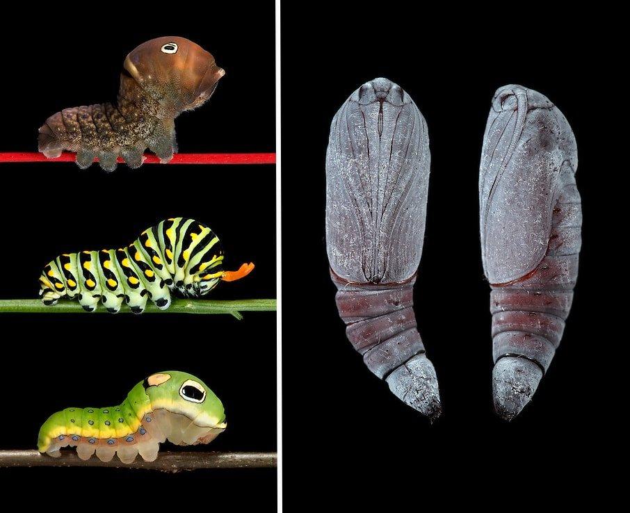Красота и разнообразие гусениц Новой Англии