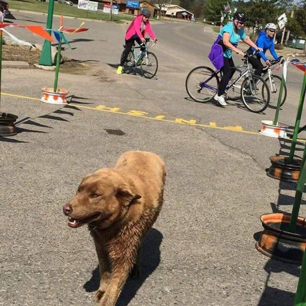 Собака, ставшая звездой города Лонгвилла