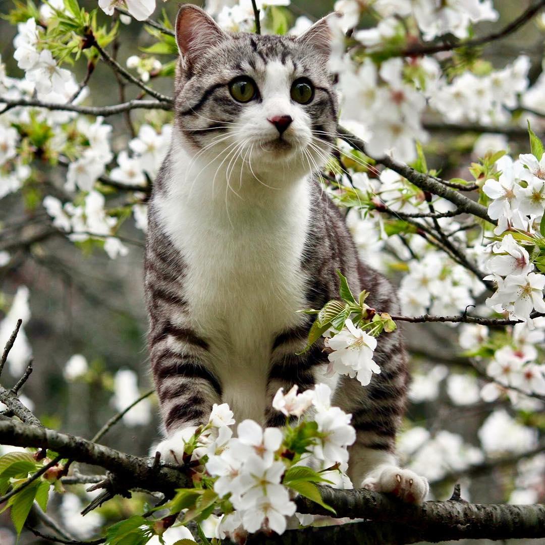 Ньянкичи — фотогеничный кот из Японии
