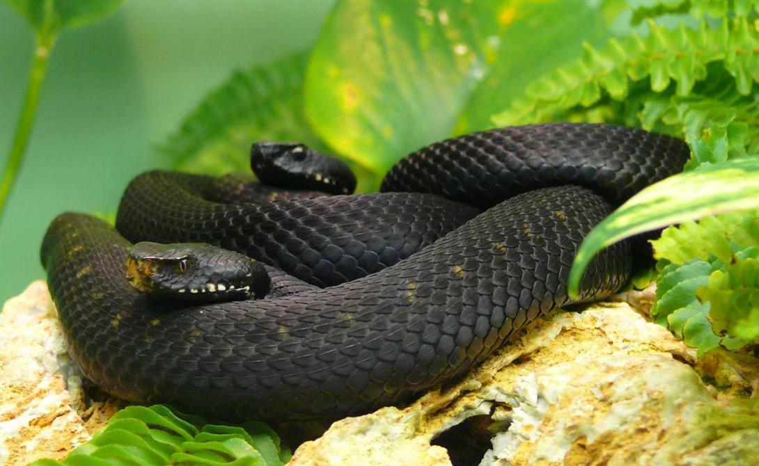 Самые длинные змеи, известные науке