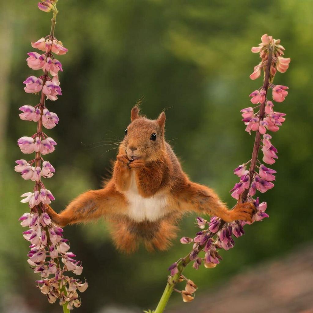 Забавные животные на снимках фотоконкурса Comedy Wildlife Photography Awards 2018