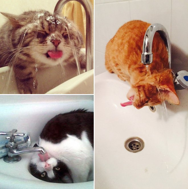 Кошки отдыхают в раковинах