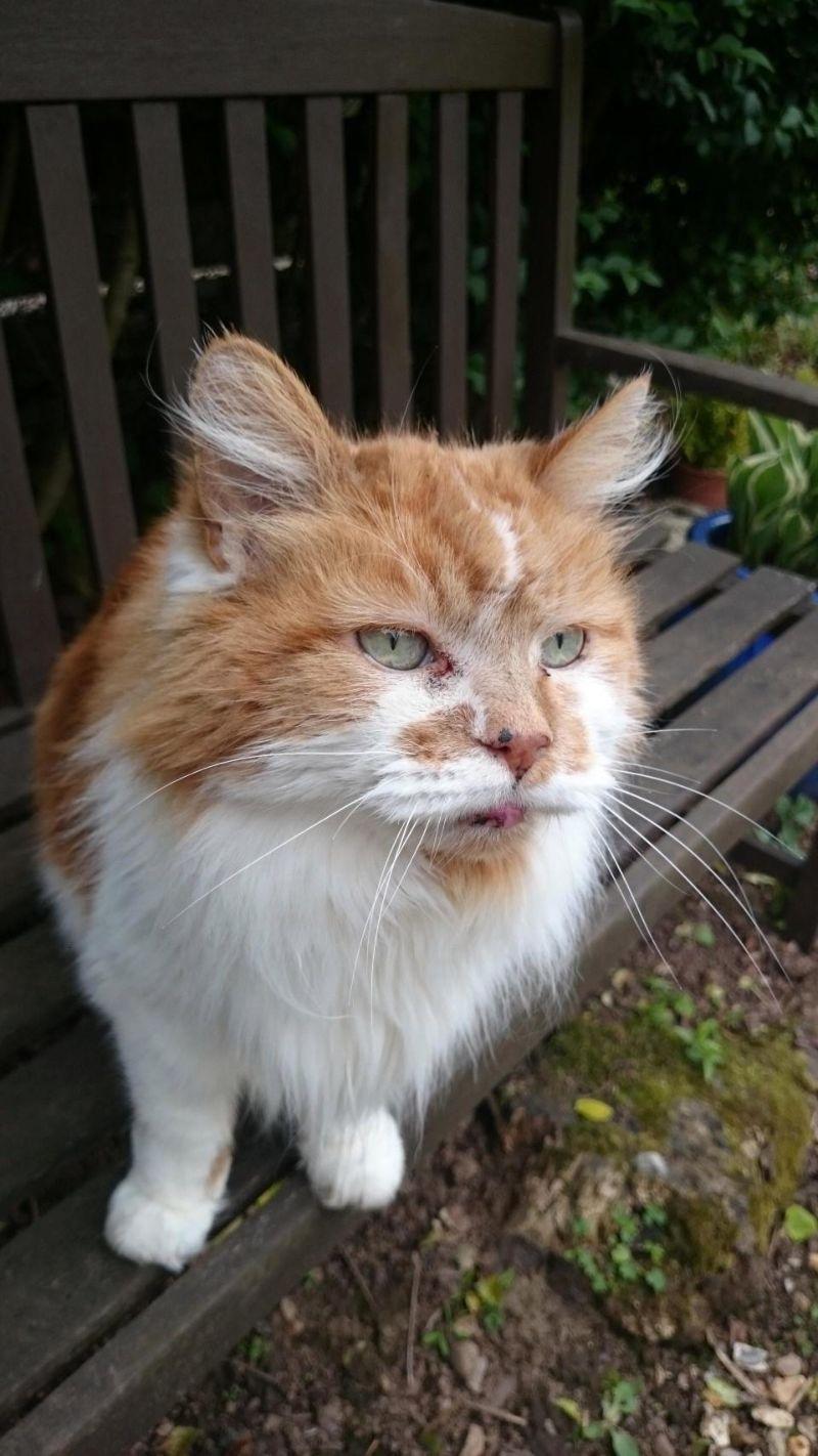 Кот-долгожитель отпраздновал свое 30-летие