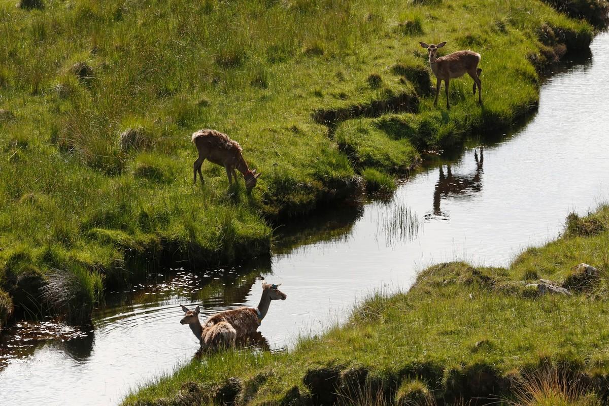 Наблюдение за оленями на острове Рам