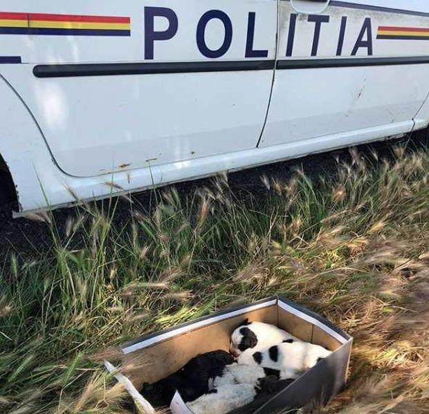 Мужчина обнаружил в поле коробку из-под обуви