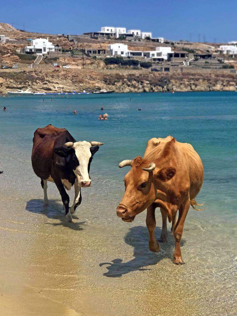 Телочки произвели фурор среди отдыхающих на пляже