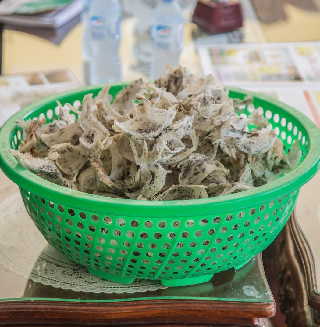 Вонючий, но прибыльный бизнес: продажа съедобных птичьих гнезд