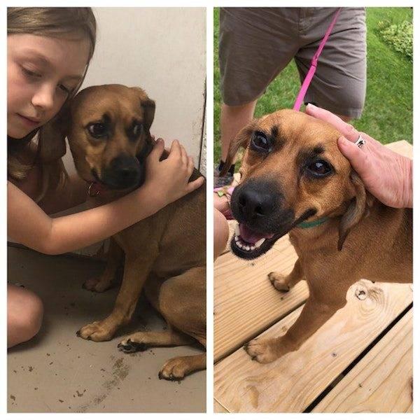 Животные, которых забрали из приюта: до и после