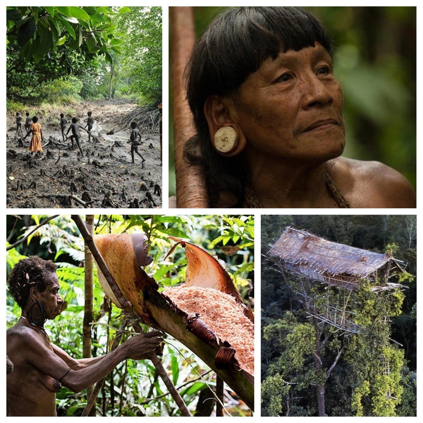 «Здесь время остановилось» или, что нам могут рассказать люди, которые не пользуются всеми благами человечества, а, к примеру, живут на деревьях?