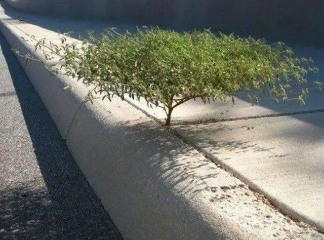 Деревья с невероятной волей к жизни