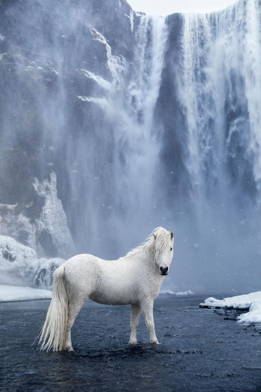 Лошади на фоне эпических исландских пейзажей