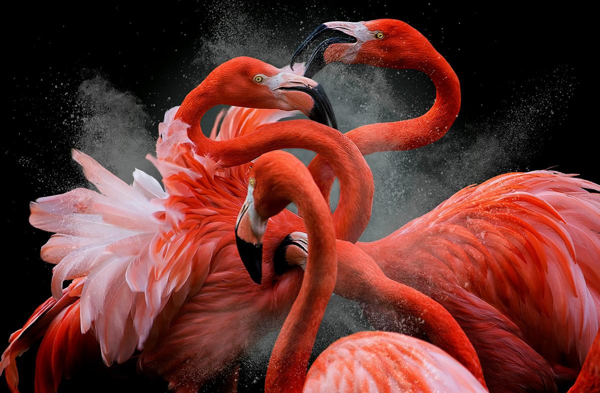 Лучшие работы с конкурса «Bird Photographer of the Year» 2018