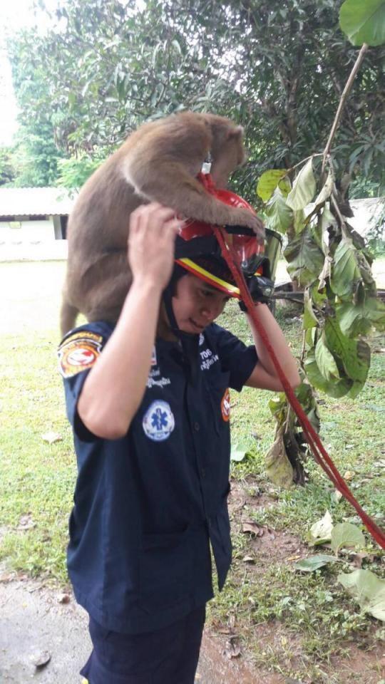 Макака обнимает своего спасителя