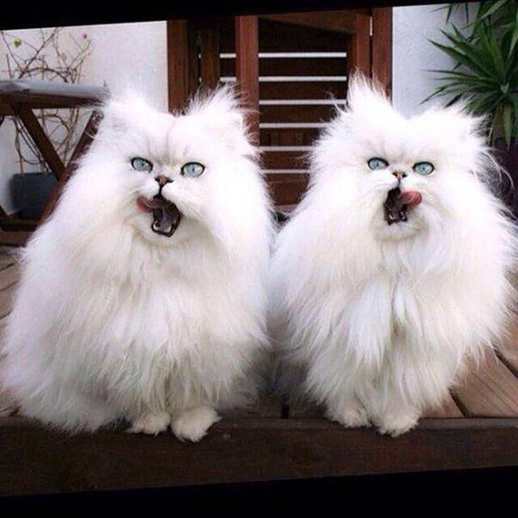 Малоисследованный факт — кошки синхронизируются