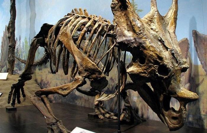 Останки вымерших животных, которые потрясающе хорошо сохранились
