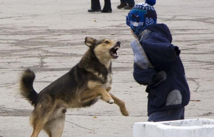 Как вести себя в случае нападения собаки