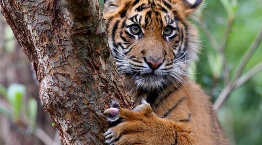 Потрясающие кошки планеты, которые почти исчезли