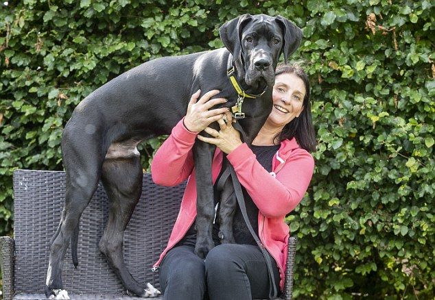 Супруги забрали из приюта щенка-великана