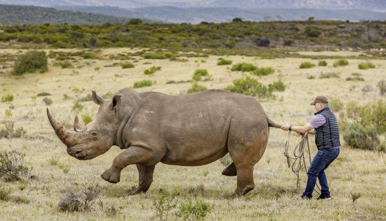 Зачем мужик схватил носорога за хвост
