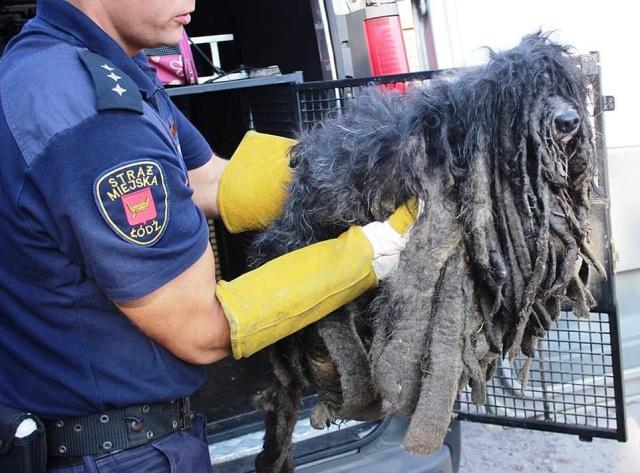 Зоозащитники спасли собаку, которая превратилась в комок шерсти