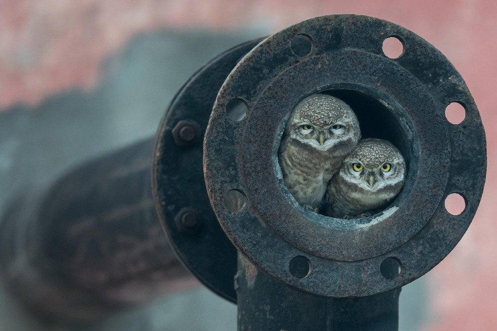 Лучшие фотографии дикой природы Wildlife Photographer of the Year 2018