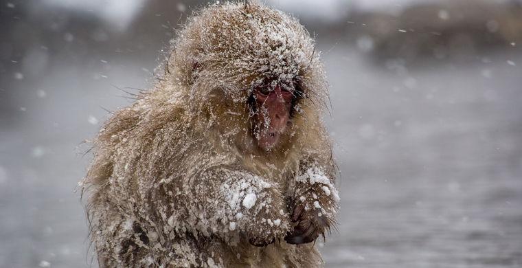 Почему человек дрожит от холода