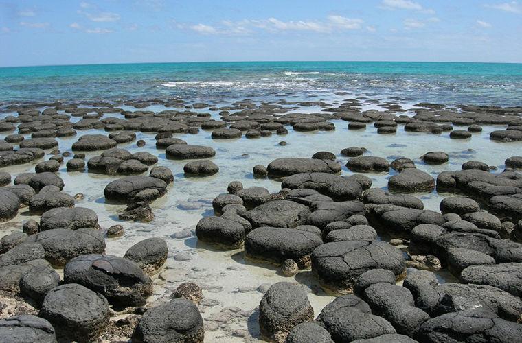 Строматолиты — живые камни