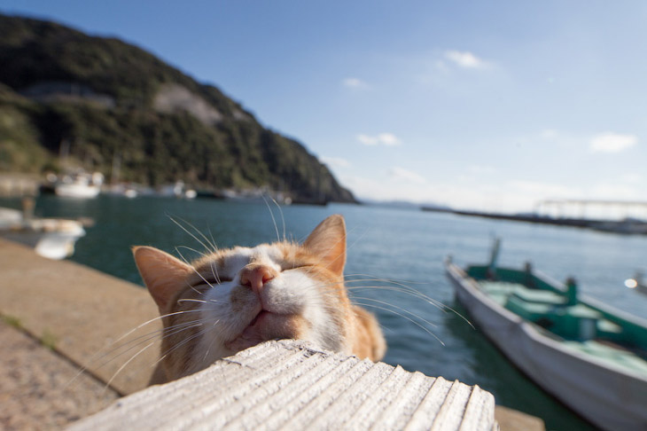 Тасиро — остров Кошек