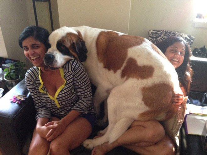 18 больших собак, которые хотят на ручки