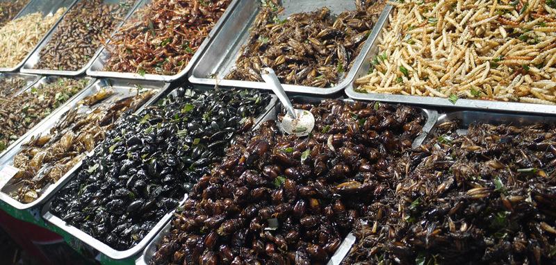 Деликатесы из насекомых в разных странах мира