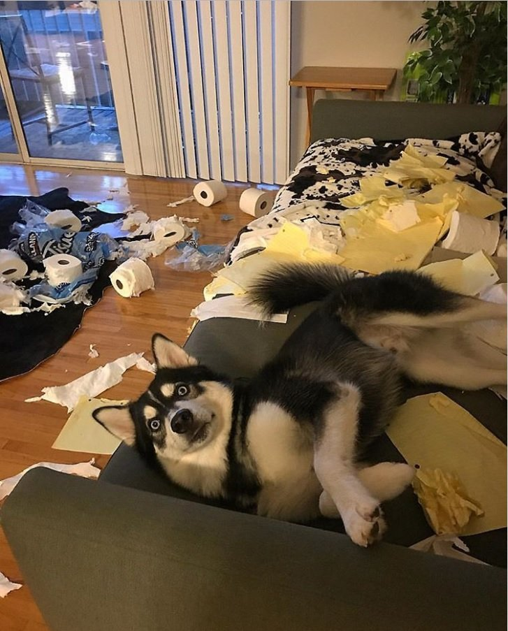 Фото, после которых вы еще больше полюбите собак хаски