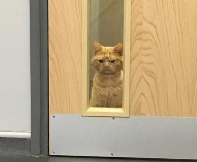 Кот Сол — самый суровый кот интернета