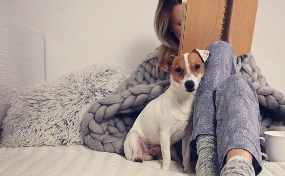 Лучшие породы собак для интровертов