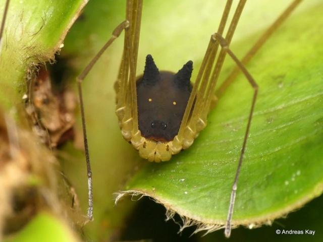 Необычный паук с головой собаки