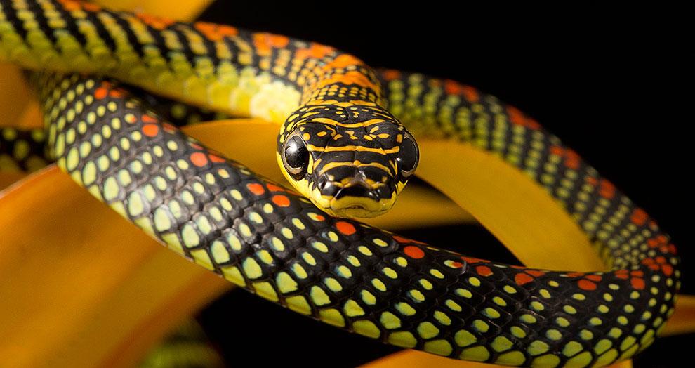 О летающих змеях