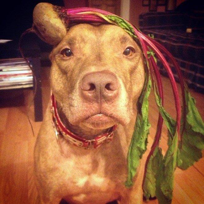 Скаут — самый терпеливый пес на свете