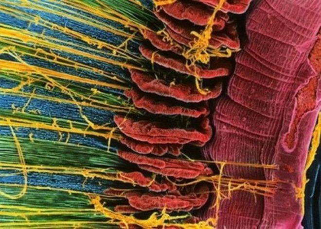 Снимки человеческих органов под микроскопом