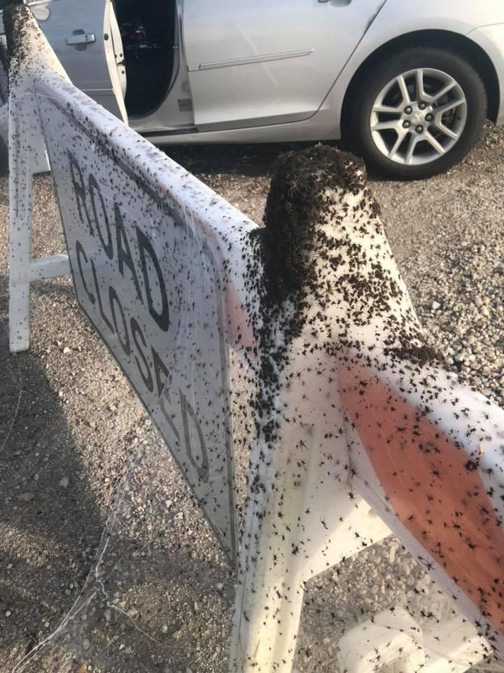Тысячи пауков вдоль шоссе в Арканзасе
