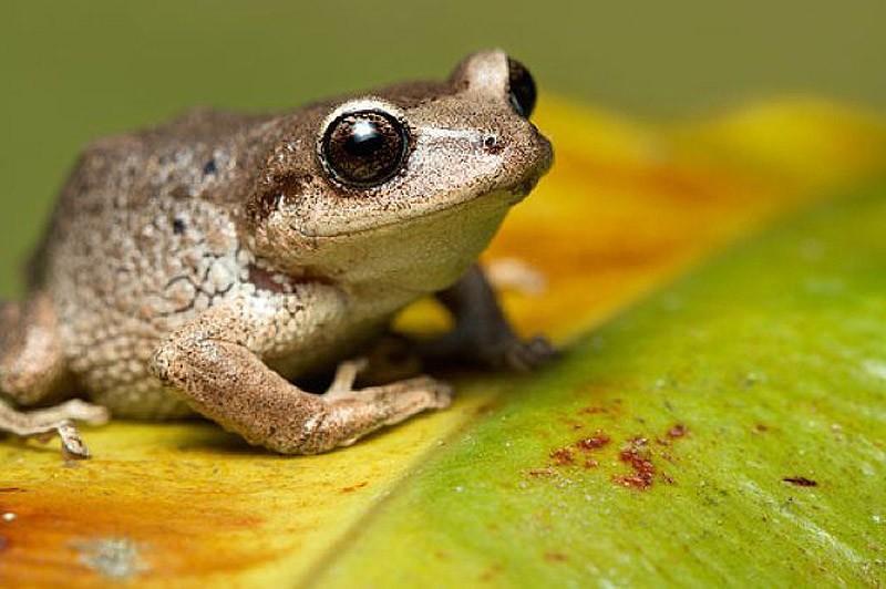 10 мифов и ошибочных фактов о животных