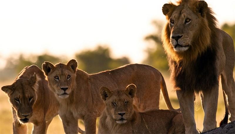 10 самых опасных животных-людоедов