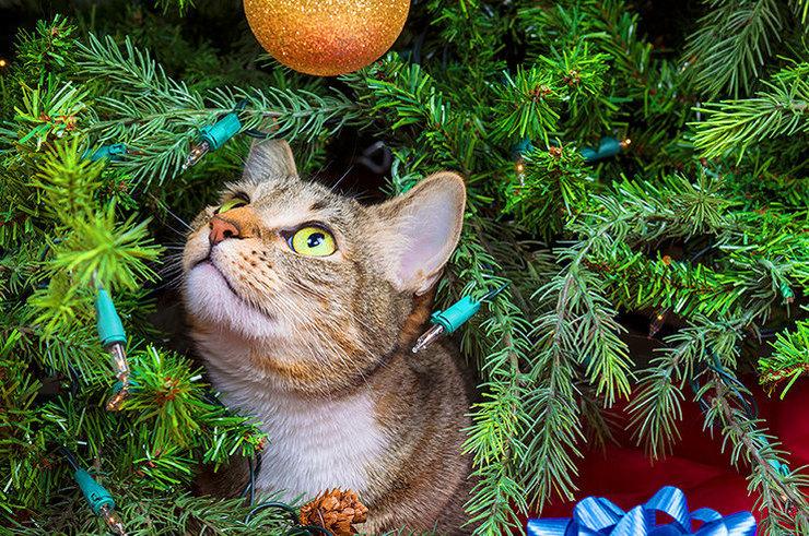 5 растений, которые опасны для кошек и собак