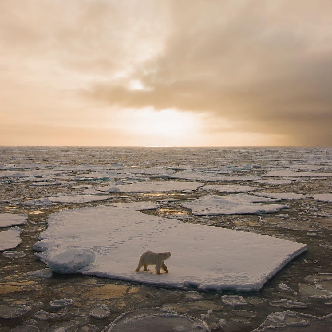 Дикая природа Арктики на снимках Одуна Ли Даля