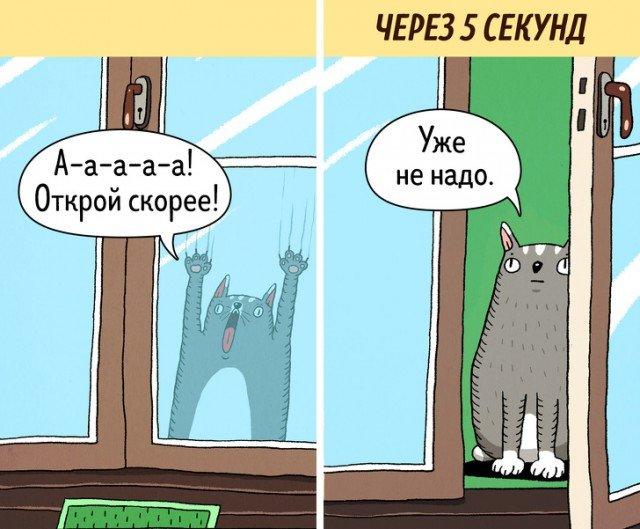Кошки — самые противоречивые создания на планете