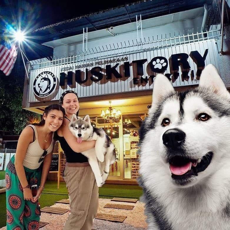 Хаскитори — общение с хаски в малазийском кафе