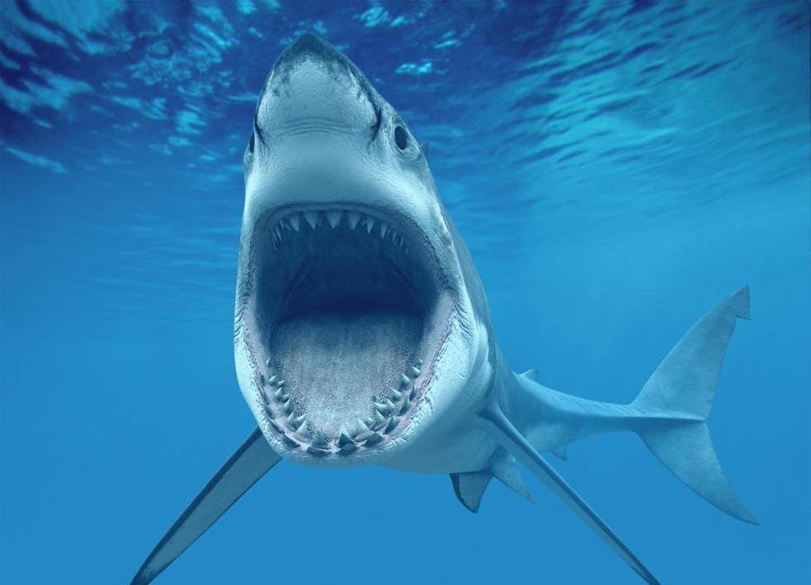 5 главных мифов об акулах