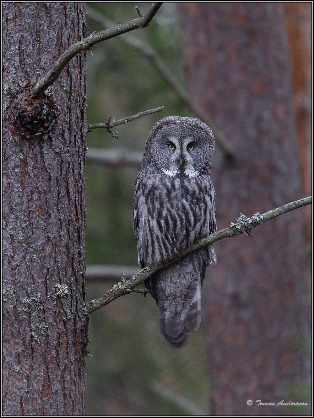 Красивые птицы Швеции на снимках Томаса Андерссона