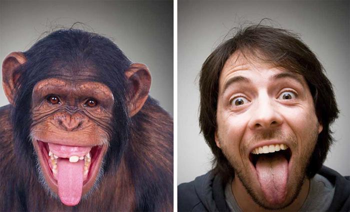 Опыты советского биолога по скрещиванию человека с обезьяной