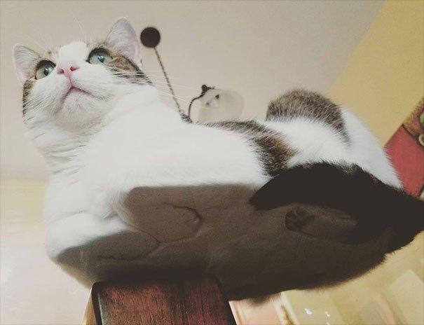 Стеклянные столы и коты с необычного ракурса