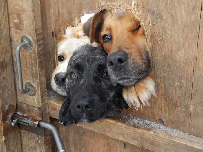 17 любопытных собак, которые выглядывают из неожиданных мест
