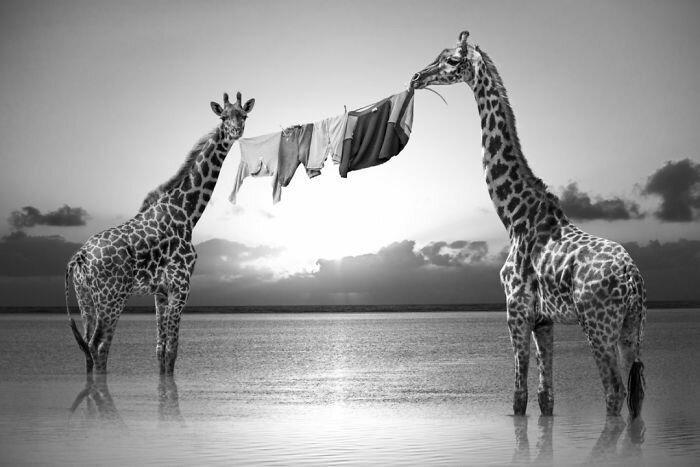 Акуна матата — тайная жизнь африканских животных